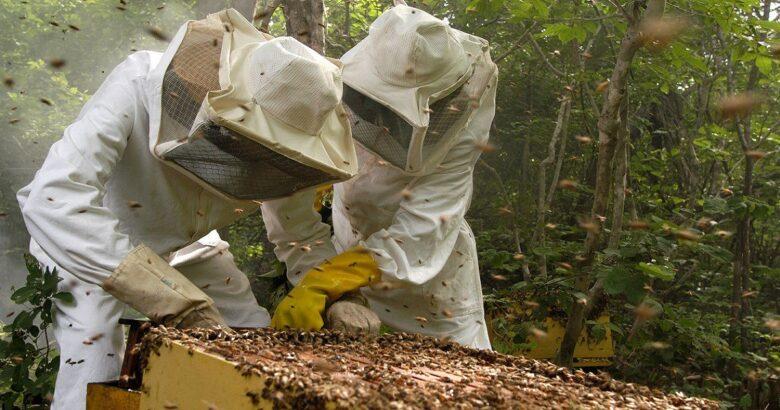 Cambiamenti climatici, apicoltori, api, Coldiretti