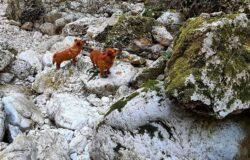 POZZILLI, Borgata Leone, trekking, torrente dei lupi