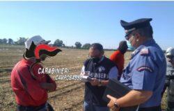 """""""Caporalato"""", Carabinieri, aziende agricole"""